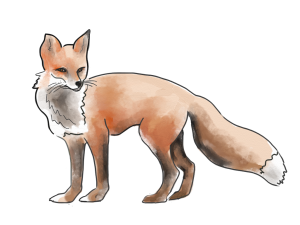 Wyllie Fox art logo