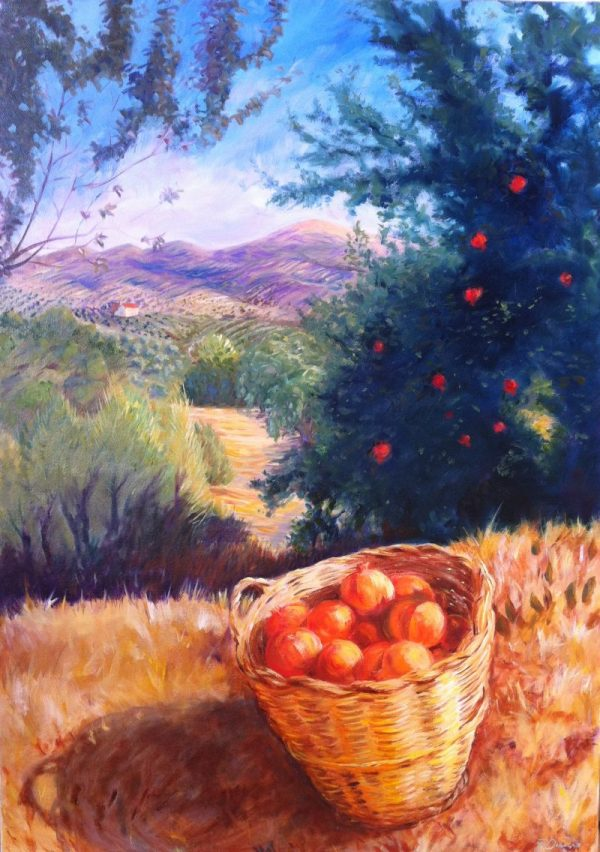 Pomegranate harvest in Algarinejo