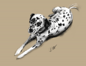 Dog Portrait sketch of Lois the naughty but nice dalmation