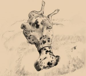 Dalmation Dog sketch Lois upside down