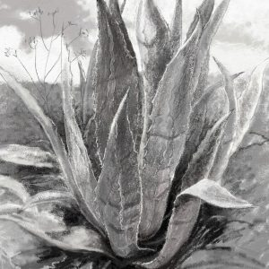 Limited Edition Print - Agave plant, Andalucia, Francesca Wyllie