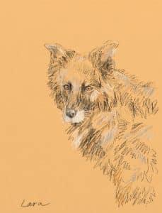 Lara the Collie Cross - Digital Dog Drawing